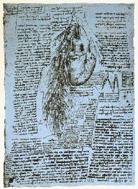 The Heart and the bronchial arteries, facsimile of the Windsor book  and