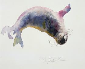 Young grey seal, Gweek