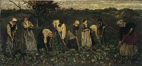 Workers on the beet field
