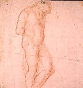 Study of a Nude (red chalk) Inv.1896/7/10/1 Verso (W.64)