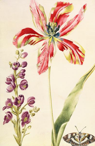 Tulip, Stocks and Butterfly