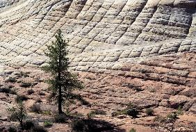 Checker-Board Mesa, Zion National Park (photo)