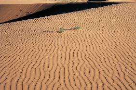 Coral Sand Dunes (photo)