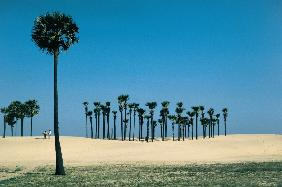 Most beautiful palm groves (photo)
