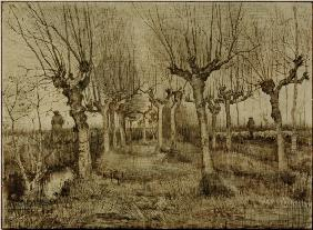 V.van Gogh, Pollard Birches / Draw./1884