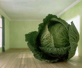 Cabbage (after Magritte) 1995 (colour photo)