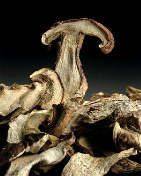 Porcini Mushrooms ''Golgotha'', 1994 (colour photo)