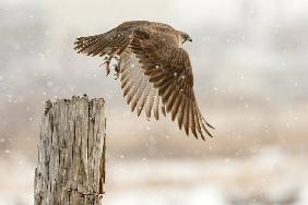 Flight against the snowstorm