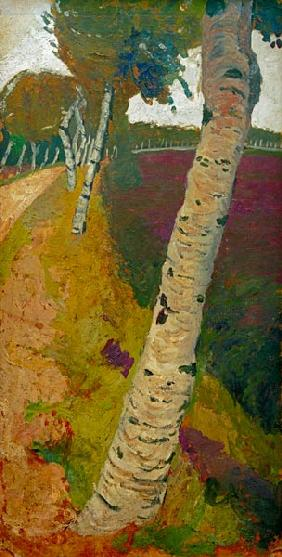 Road with birch tree