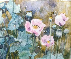 Pink poppies with bees (w/c)