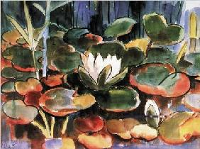Waterlilies  - (KS-191)
