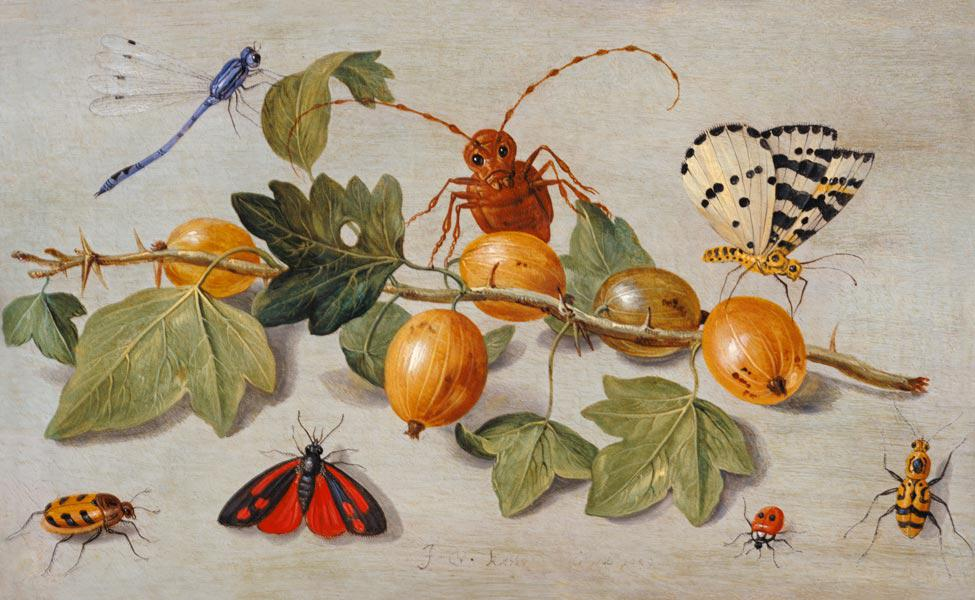 Still life of branch of gooseberries, with a butterfly, moth, damsel fly and other insects (oil on c