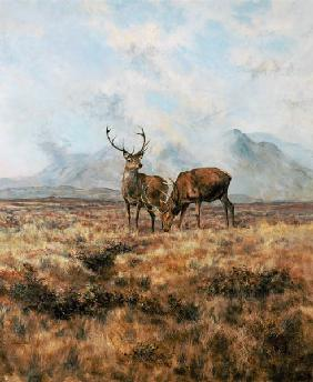 Red Stags, Ben Buie, 1982