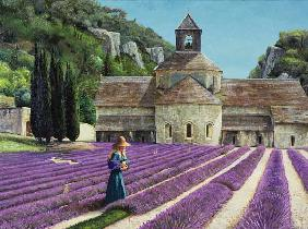 Lavender Picker, Abbaye Senanque, Provence (oil on canvas)