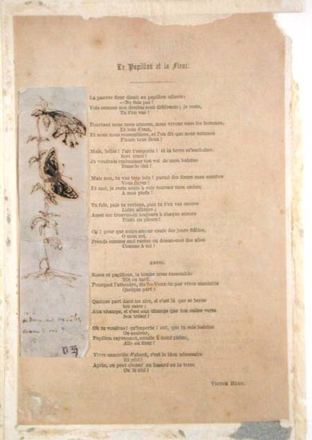 Le Papillon Et La Fleur Poem With An Victor Hugo En