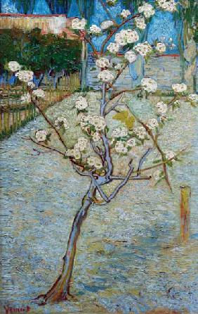 van Gogh/Blossoming pear tree/April 1888