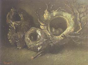 Still life with three bird's nests