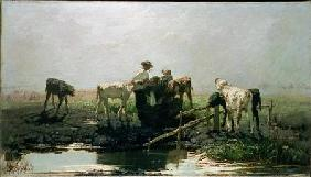 Calves at a Pond