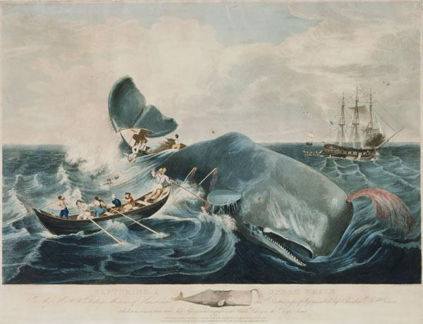 Capturing a Sperm Whale, engraved by J. Hill