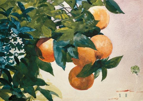 Branch with oranges